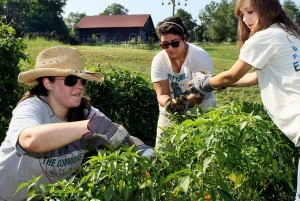 Students at Kennesaw State University work on crops at the school's sustainable farm, which provides foods consumed on campus and helped KSU win two awards for its sustainable cuisine. Credit: KSU