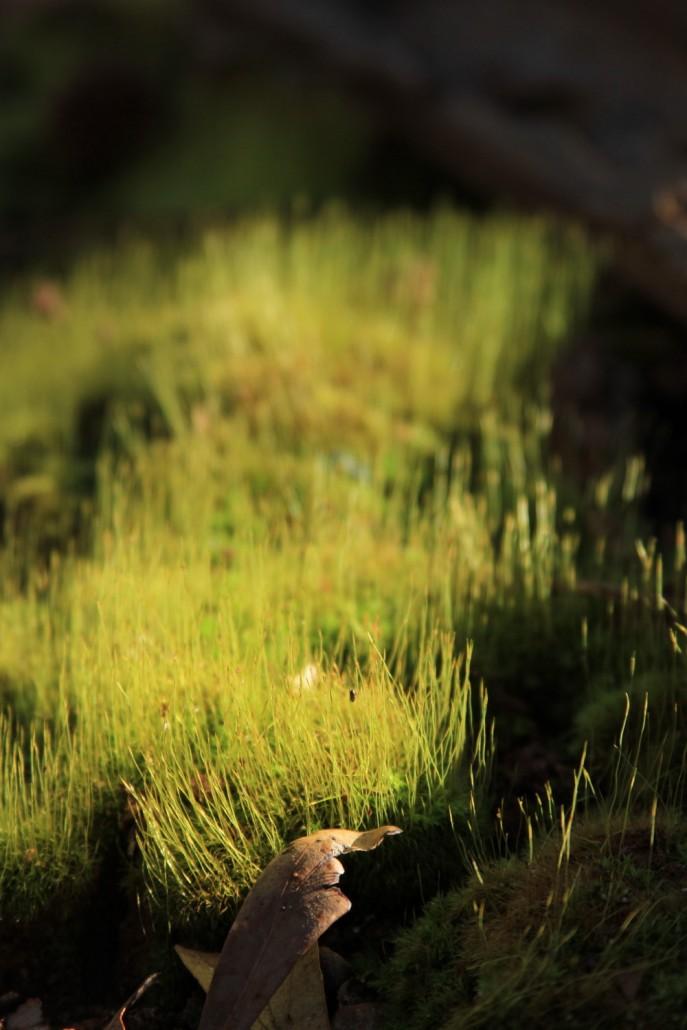 Kirkwood Moss