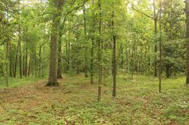The city of Watkinsville purchased six acres of land to preserve as green space for the community. Credit: Williams & Associates