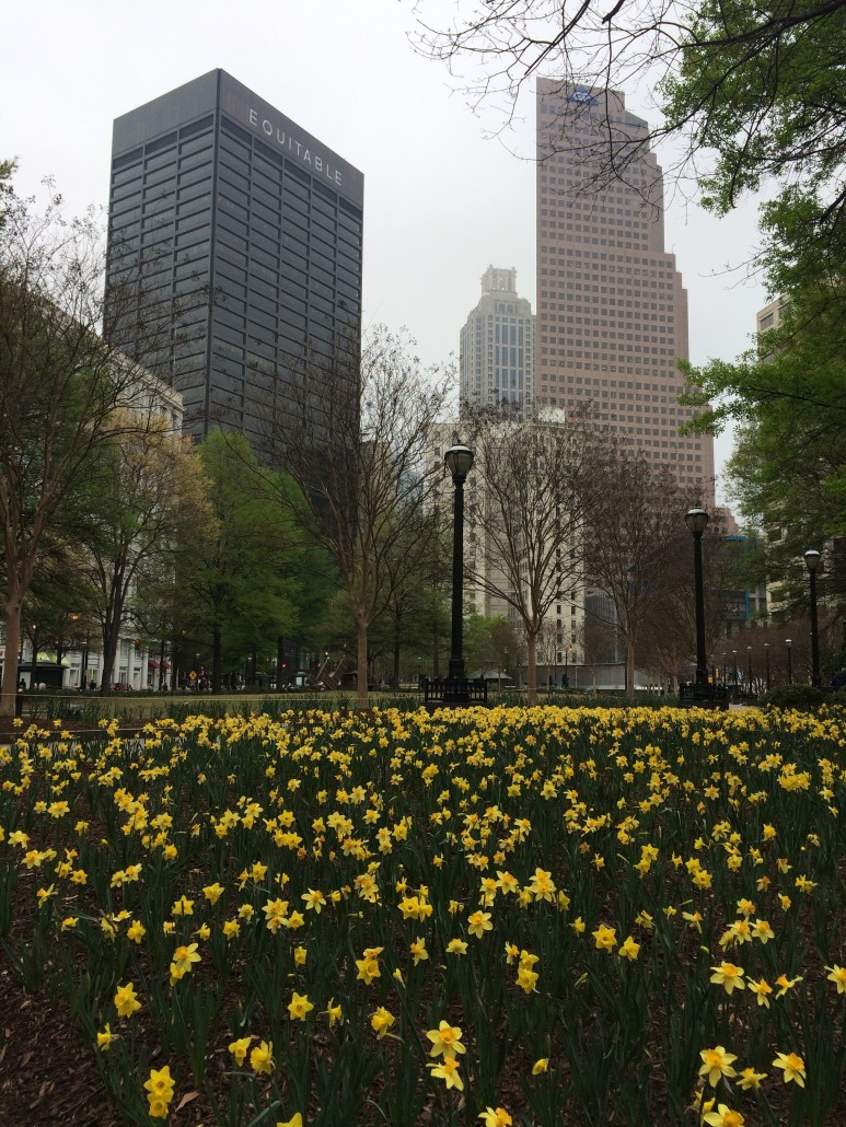 Daffodils in Downtown Atlanta by Odetta MacLeish-White