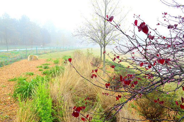 Foggy Morning on the BeltLine by Lisa Panero
