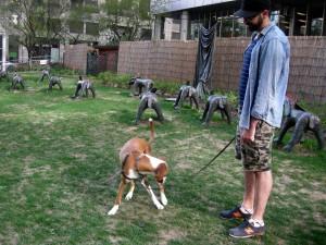 toronto dog park