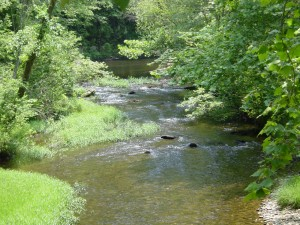 Environment Georgia wrote the latest chapter in the book on citizen advocacy when it prevailed in an effort to grant the highest level of protection to the headwaters of the Conasauga River. Credit: Environment Georgia