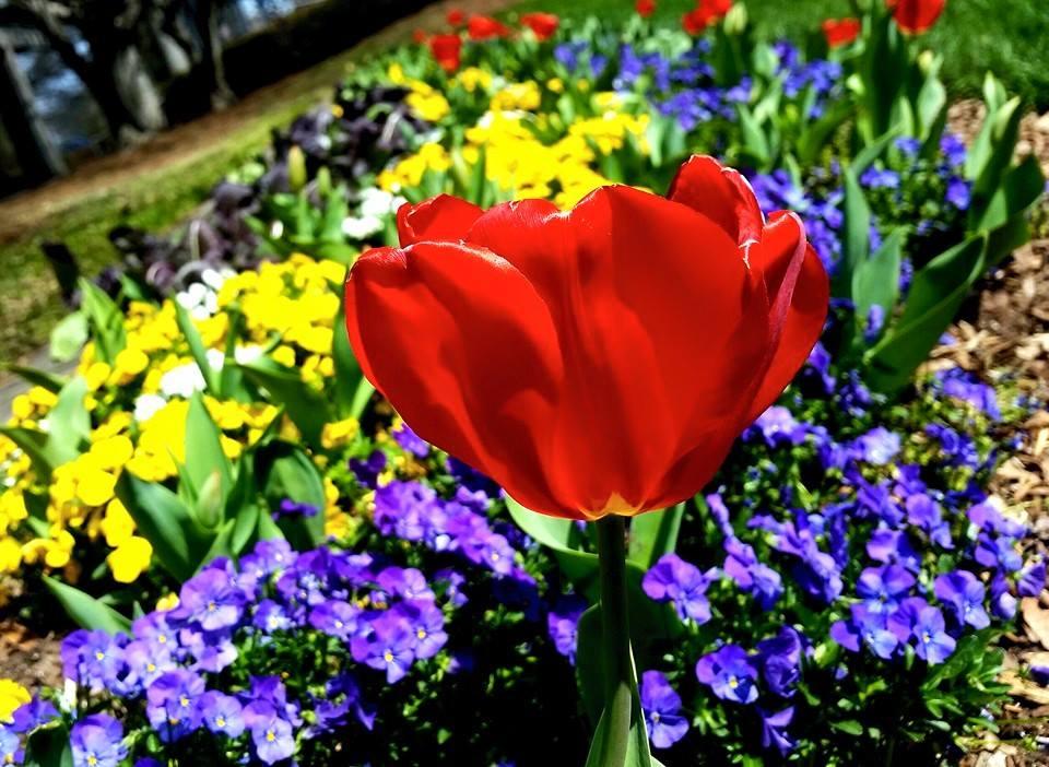 Bloom by Beth Keller