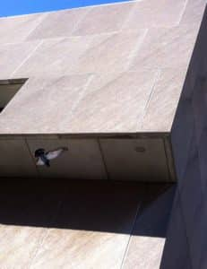 Downtown Library as pigeon takes flight (Photo by Kelly Jordan)