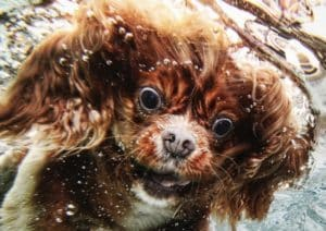 'Underwater Dogs' captures a range of emotions. Credit: littlefriendsphoto.blogspot.com