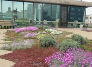 Atlanta is in the early stages of its plan to renovate the green roof atop City Hall. Credit: greenroofs.com