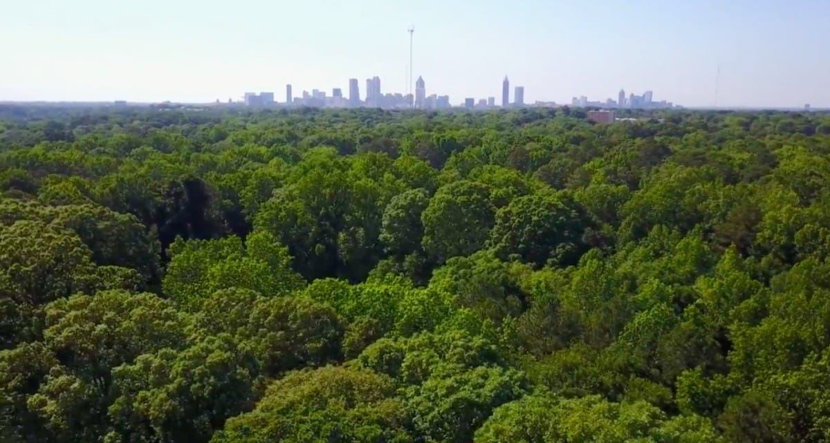 Ormewood forest trees Atlanta skyline