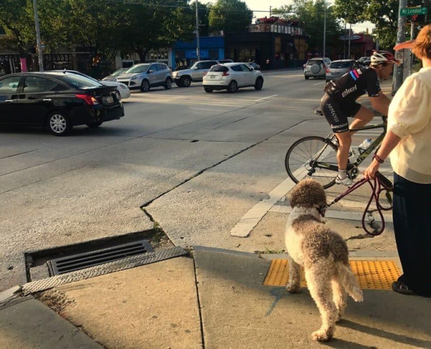 moreland, dog walk, cyclist