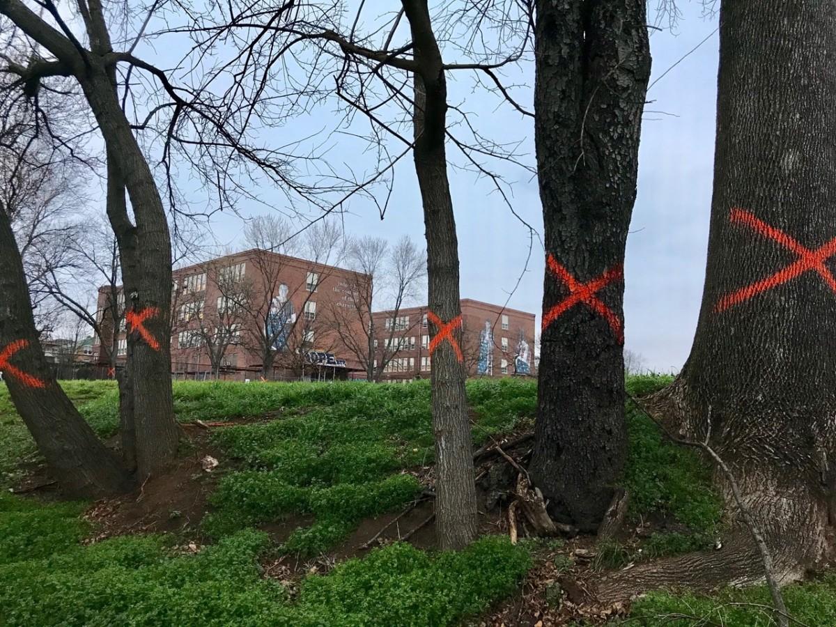 Howard trees