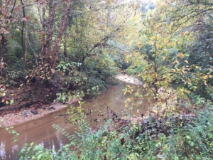 Marsh Creek in the Area of a Proposed Sandy Springs Trail