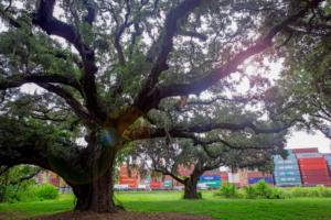 Garden City Terminal Historic Oak