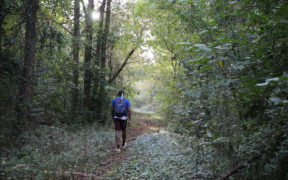 Sandy Springs Trail System, Woodlands near the future Marsh Creek segment of the