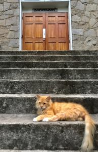 Cat lounging on church steps