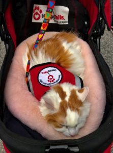 A cat wearing a vest from Happy Tails Pet Therapy