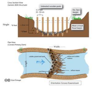 beaver dam, cross section