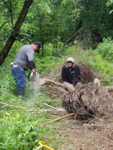 beaver dam, sharpening posts