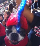 Dogs at Turner Field's Bark in the Park event on Sept. 16