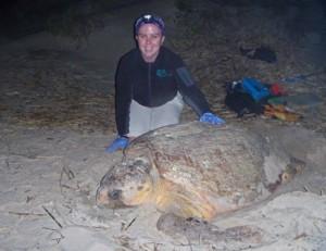 Turtle with volunteer