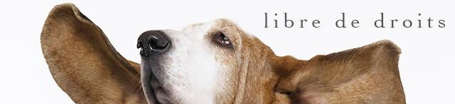 NATURE ANIMALE : banque photos libres de droits