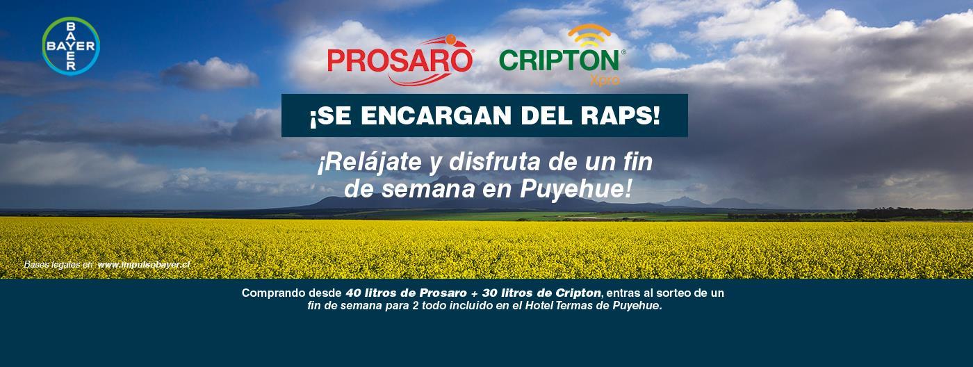 CRIPTON Y PROSAGRO