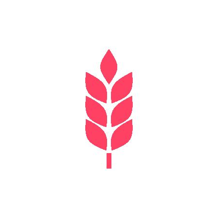 Sementes de trigo