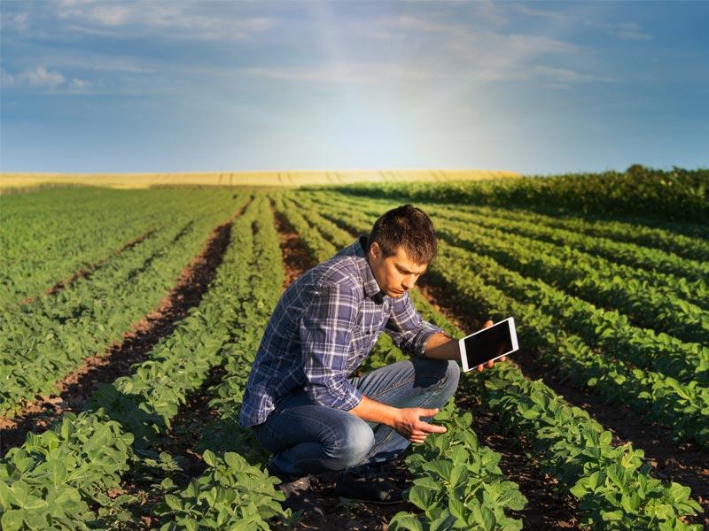 Monitoramento de plantação de soja. Foto: Shutterstock.