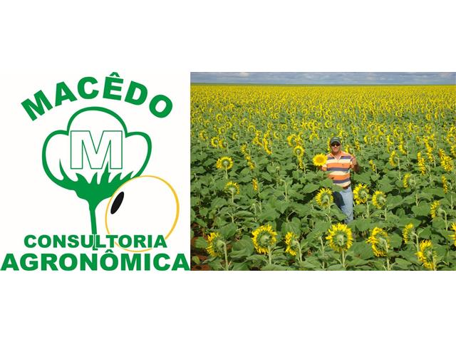 Assistência Agronômica - Paulo Roberto