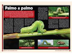 Revista Cultivar Grandes Culturas - 1