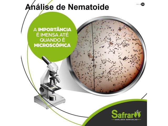 Análise de Nematoide - Safrar