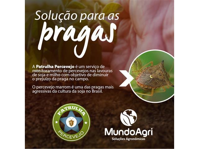 Patrulha Percevejo - Mundo Agri - 1