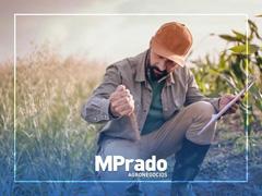Consultora Customizada - MPrado
