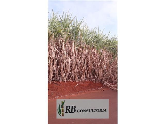 Agroespecialista - Renato Bibian