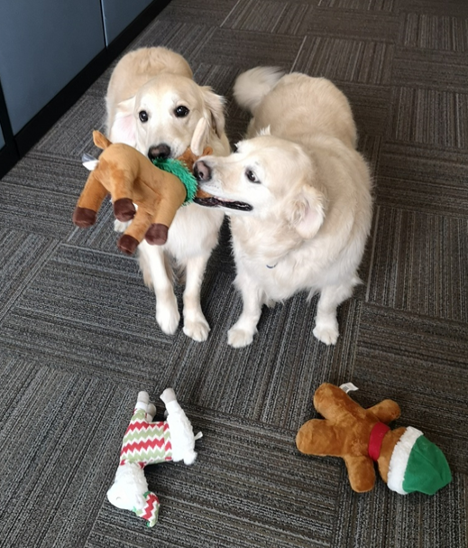 Chalky and Lucy entertain themselves and Satelytics' scientists in the office.