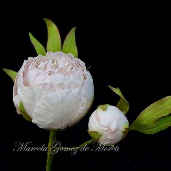 Marcela-Gomez-Marcela-Gomez-Cake-Designer-Seasonal-Celebration-Spring-0.JPG#asset:18322:homeSlider