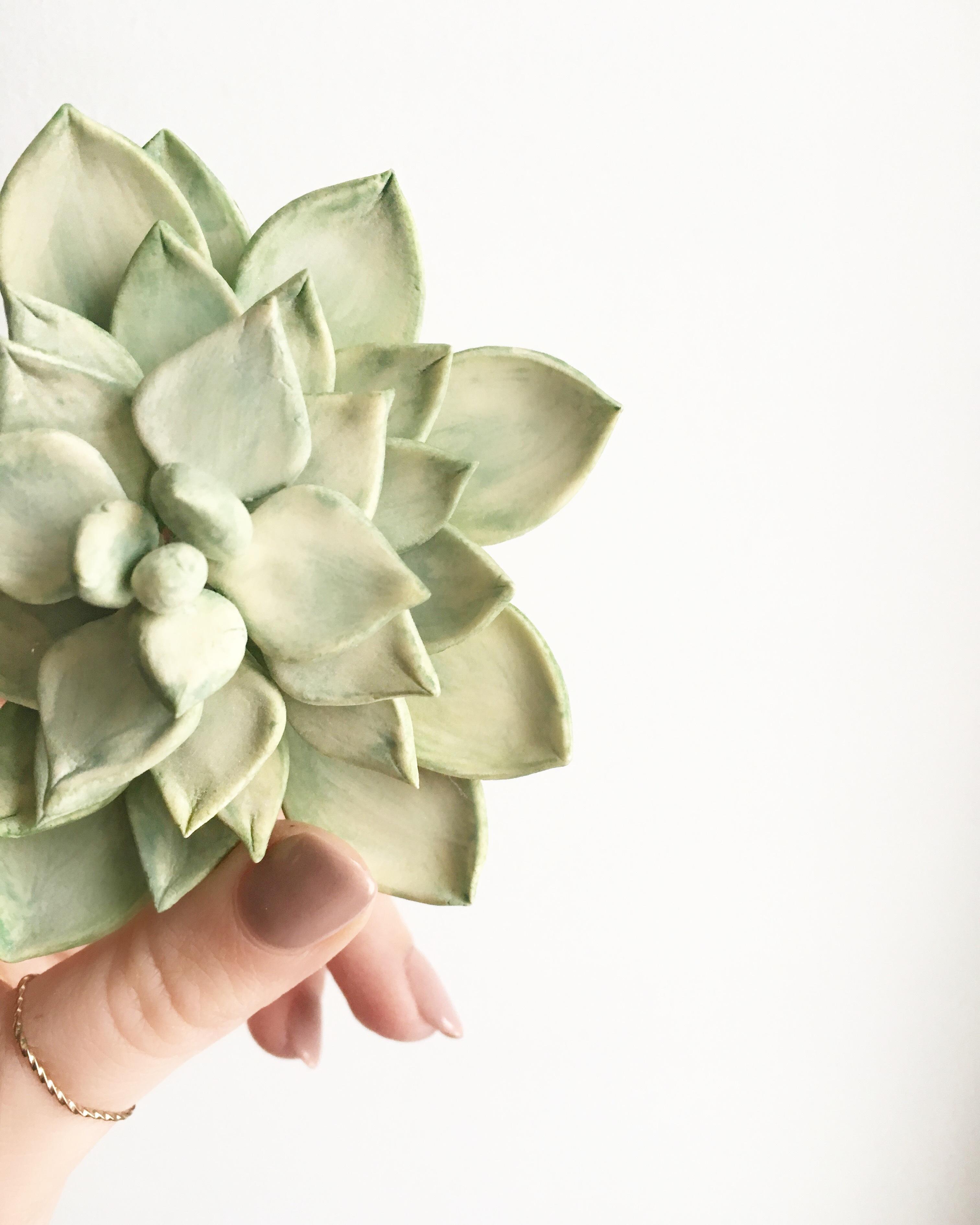 Gum Paste Succulent