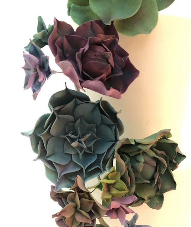 Multicolored succulents