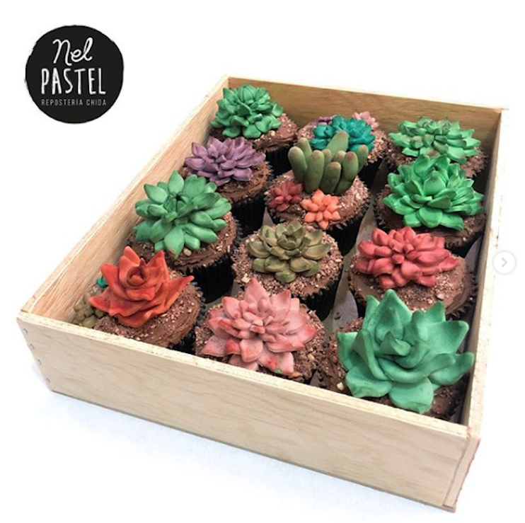 Multicolored succulent cupcakes