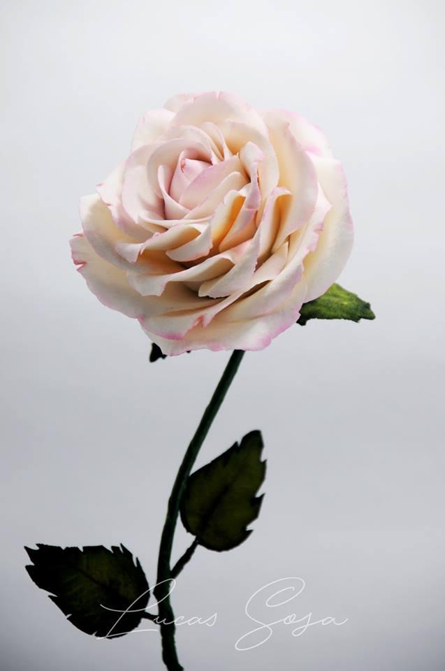 Light pink sugar flower