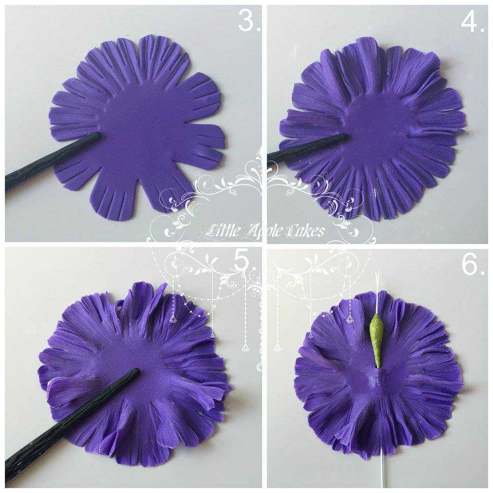 Carnation-3.jpg#asset:17943