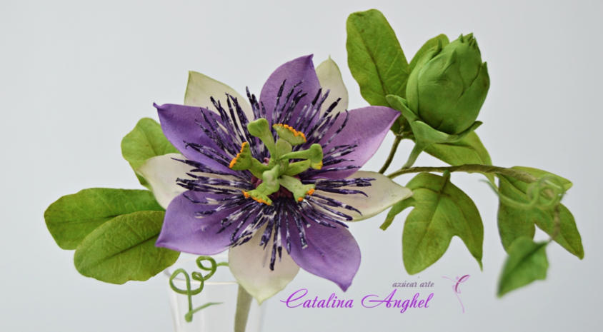 Freeform-passion-flower-end.png#asset:18538