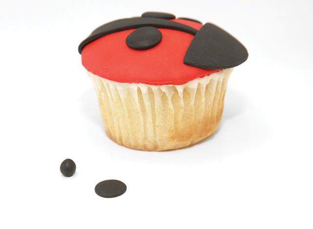 ladybug-6.jpg#asset:18030