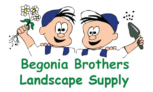 Image result for begonia brothers