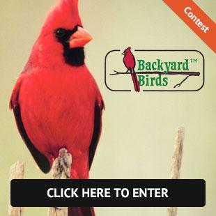 backyard_birds_bloomfield