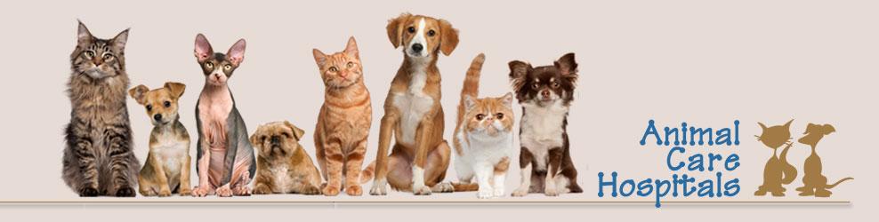 Animal Care Hospitals