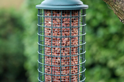 Backyard Birds Bloomfield Hills Coupons