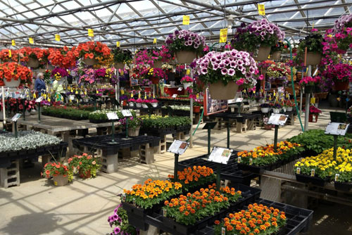 deneweth 39 s garden center in macomb mi coupons to saveon florists nurseries