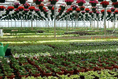 Malmborg S Garden Center Greenhouse In Twin Cities Mn Coupons