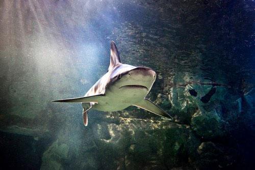 Sea Life Minnesota Aquarium Coupons
