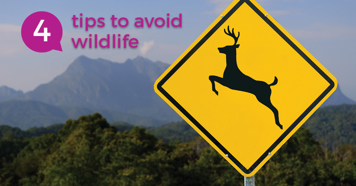 2018 12 10 Blog Deer Crossing Sign In Front Of Mountain Landscape